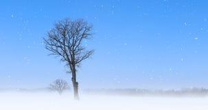 ensligt träd för 4K UltraHD i ett snöig landskap arkivfilmer