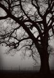 Ensligt träd i dimmigt fält Arkivfoto