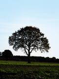 Ensligt träd mot himlen Royaltyfria Bilder