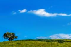 Ensligt träd och blå himmel Fotografering för Bildbyråer