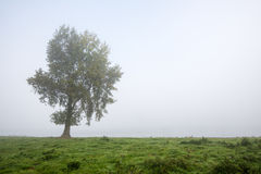 Ensligt träd på en dimmig morgon Arkivbilder