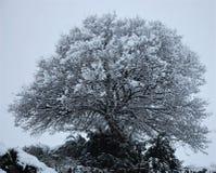 Ensligt träd som täckas i snö, Frankrike royaltyfri foto