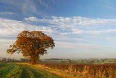 Ensligt träd under en stor himmel Arkivbilder