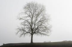 Ensligt träd i en dimmig morgon Arkivfoton