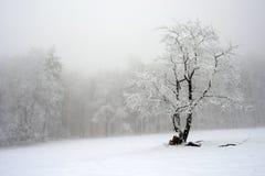 Ensligt träd i vinter, snöig landskap med snö och dimma, dimmig skog i backgrouden Royaltyfria Bilder