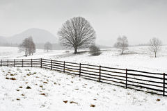 Ensligt träd i vinter, snöig landskap med snö och dimma, dimmig skog i backgrouden Royaltyfri Bild
