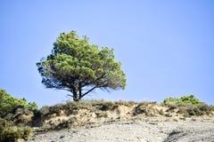 Enslingen sörjer trädet Royaltyfria Bilder
