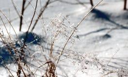 ensoleillé lisse de glace d'herbe de jour Photos libres de droits