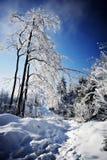 Fotvandra i vinter Royaltyfri Foto
