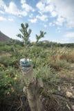 Ent op een mangoboom Royalty-vrije Stock Foto's