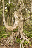 The Ent of Ucluelet Royalty Free Stock Image