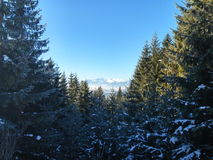 Entaille de montagne dans Karpatian Photographie stock libre de droits