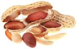 Entalhe dos amendoins Fotos de Stock