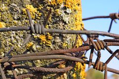 Entangled barbed wire fence Stock Photography