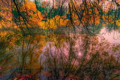 Entangled Reflections. In love with their reflections, the branches seemed eager to dive in the river stock images