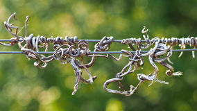 Entangled wire. By a grapevine Stock Photos