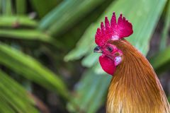 Entassez étroit à la ferme, fond vert de nature Photographie stock
