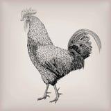 Entassez le St vivant d'oiseau de coq de jeune coq de ferme de volaille domestique d'animal illustration stock
