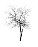 Entblössen Sie getrennten grauen Baum Stockfoto