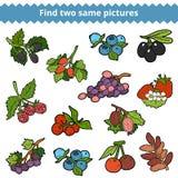 Entdeckung zwei die gleichen Bilder Vektorsatz Beeren Lizenzfreie Stockbilder