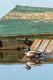 Ente auf Dock Lizenzfreies Stockfoto