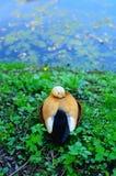 Ente auf einem Teich Stockfotografie