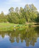 Ente auf einem Ufer lizenzfreies stockfoto