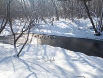 Ente auf Fluss lizenzfreies stockfoto