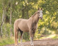 Ente completo del cavallo Immagini Stock