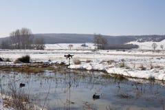 Ente, die Bereich jagt lizenzfreies stockfoto