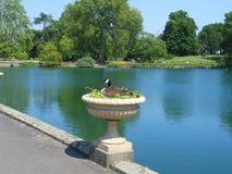 Ente in einer Urne Lizenzfreie Stockfotografie