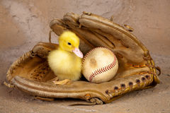 Ente im Baseballhandschuh Stockfotos