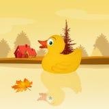 Ente im See im Herbst Stockfotografie