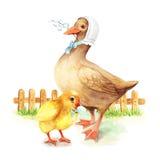 Ente mit einem kleinen Entleinweinleseaquarell Stockbild