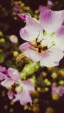 Ente occupato di primavera Fotografia Stock Libera da Diritti