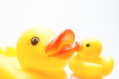 Ente und Entlein Stockfoto