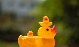 Ente und Entlein Lizenzfreie Stockfotografie