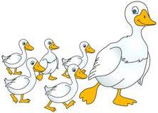 Ente und Entlein Lizenzfreie Stockfotos