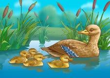 Ente und Entlein Lizenzfreie Stockbilder