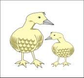Ente und Schätzchenente Stockbild