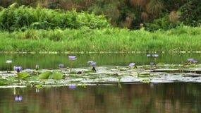 Λίμνη Βικτώρια κοντά σε Entebbe Στοκ Εικόνες
