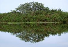 Άποψη ακτών της λίμνης Βικτώρια κοντά σε Entebbe Στοκ Εικόνα