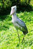 Entebbe zoo längs Lake Victoria i Uganda royaltyfria bilder