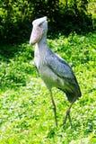 Entebbe zoo wzdłuż jeziora wiktorii w Uganda Obrazy Royalty Free