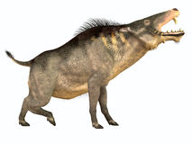 Entelodon Side Profile Royalty Free Stock Photos