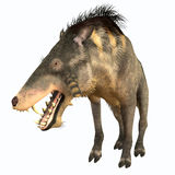 Entelodon Terminator Pig Stock Photography
