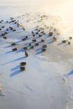 Enten auf dem Eis, das kalten Morgen einfriert Stockfoto