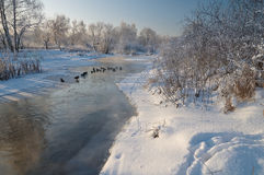 Enten auf dem Fluss im Winter Lizenzfreies Stockfoto