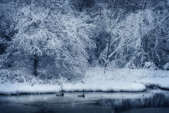 Enten auf dem Teich Stockfotos