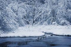 Enten auf dem Teich im Winter Lizenzfreies Stockbild